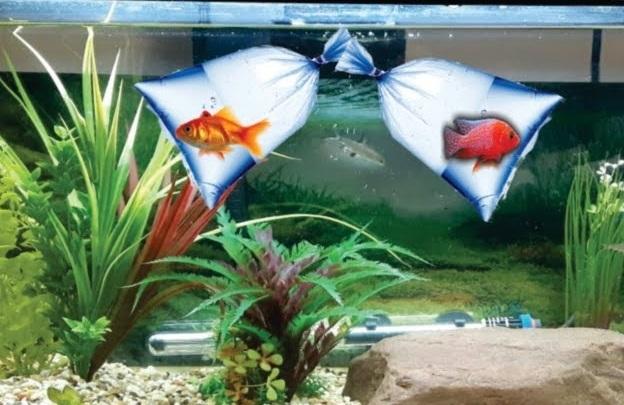 Akvaryuma Balık Ekleme