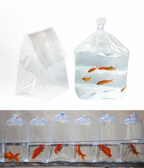 Balık Paketleme