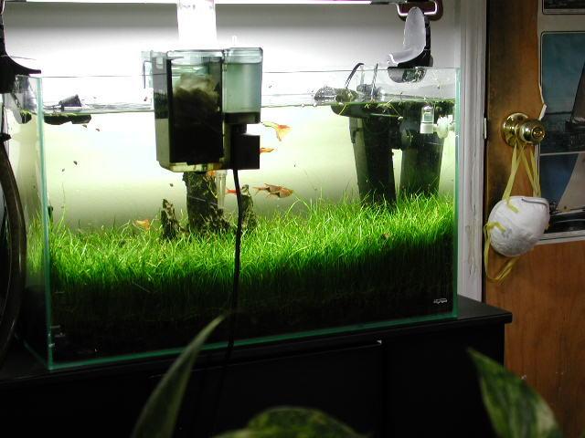 Bitki Akvaryumu Filtre Sistemi