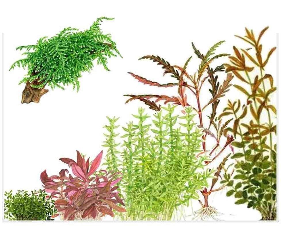 Bitki Seçimi