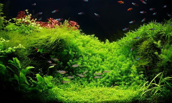 Bakımlı Bitki Akvaryumu