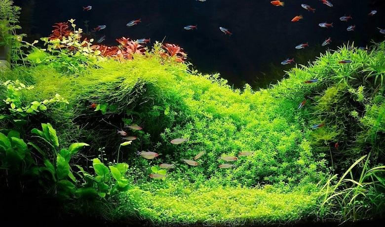 Bitkili Akvaryum Mikro Element Gübresi