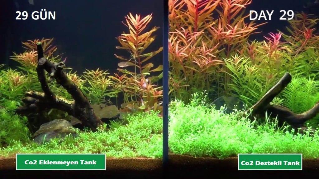 Bitki Akvaryumu - Co2 Eklenen ve Eklenmeyen Tanklar - 29 Gün Sonu