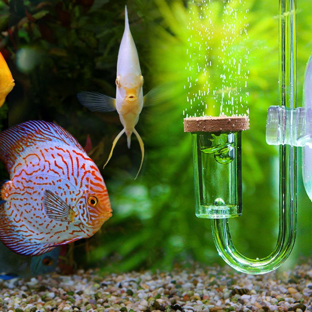 Bitki Akvaryumu - Co2 Enjeksiyonu