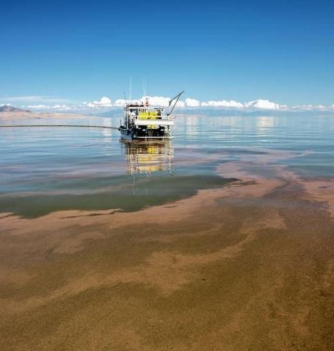 Great Slat Lake - Hasat ve Toplama