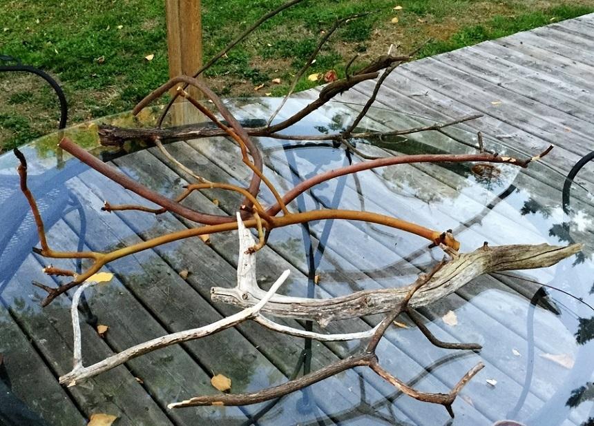 Akvaryum İçin Toplanan Doğal Odun Parçaları