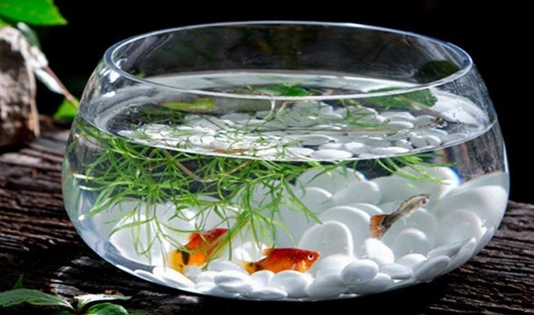 Fanusta Balık Beslemek