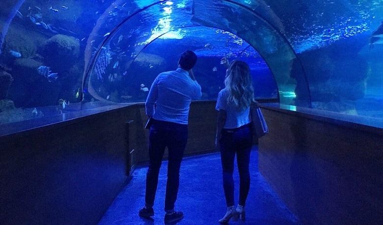 Aquavega Aquarium