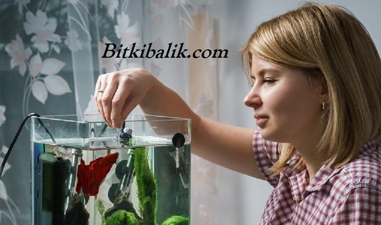 Beta Balığı Beslenmesi