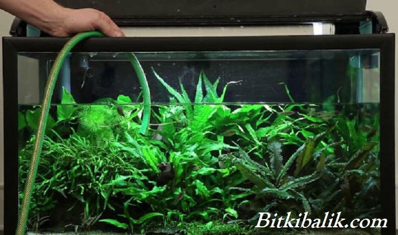 Bitki Akvaryumu Temizliği