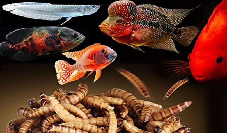 Un Kurdu Yiyen Balıklar