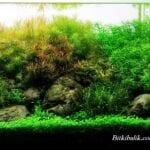 Bitki Akvaryumu Kurulumu Resimli Anlatım