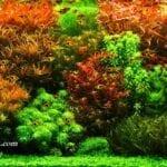 Bitki Akvaryumu Nasıl Kurulur