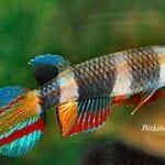 Sihirli Balık Yemi