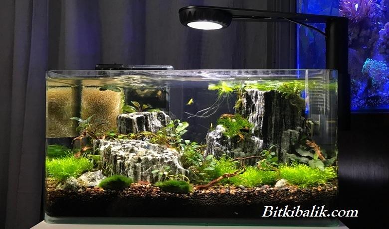 Bitkili Karides Tankı