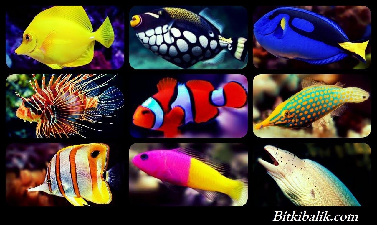 Deniz Akvaryumu Balık Çeşitleri