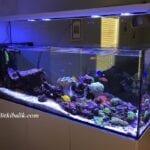 Dolaplı Deniz Akvaryumu