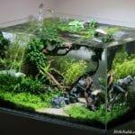 Mobilyalı Bitkili Akvaryum