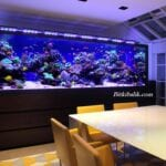 Yemek Odası Deniz Akvaryumu