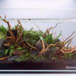 Akvaryum Bitkisi İçin Taban Nasıl Olmalı