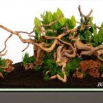 Akvaryumda Bitki Bakımı İçin Taban Kurulumu