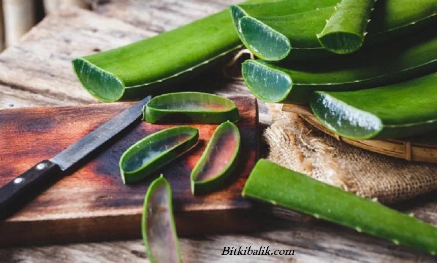 Aloe Veranın Faydaları Nelerdir