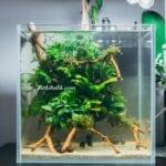 Küçük Bitki Akvaryumu Tasarımı
