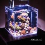 Küçük Deniz Akvaryumu Modelleri