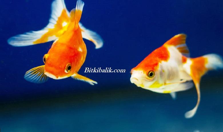 Mutlu Balıklar