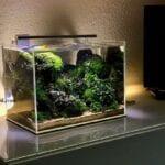 Nano Bitki Tankı