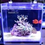Nano Deniz Akvaryumu