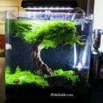 Nano Moss Tankı