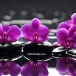 Orkide Nasıl Sulanır