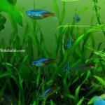 Bitkili Akvaryumda Bakılan Balıklar