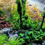 Bitkili Orman Tasarımlı Akvaryum