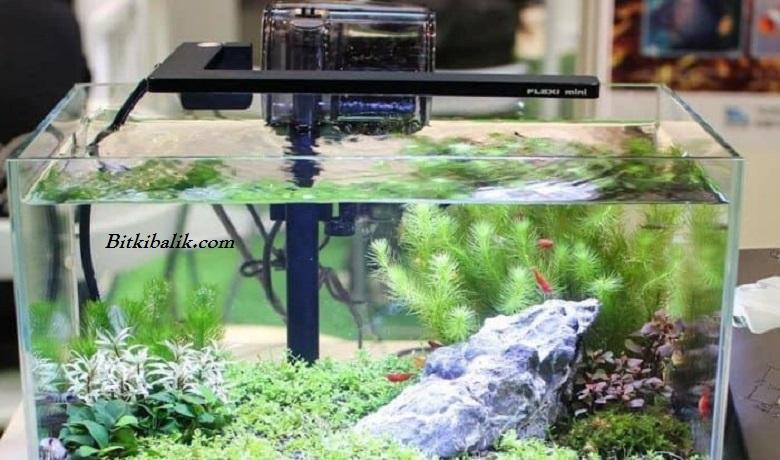 Küçük Balık Tankı Modelleri