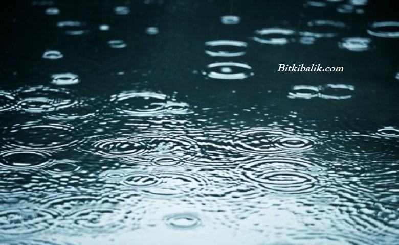 Akvaryuma Yağmur Suyu Konur Mu
