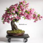 Bonsai Çiçeği Faydaları