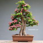 Bonsai Dekorasyonu
