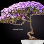 Çiçekli Küçük Ağaç