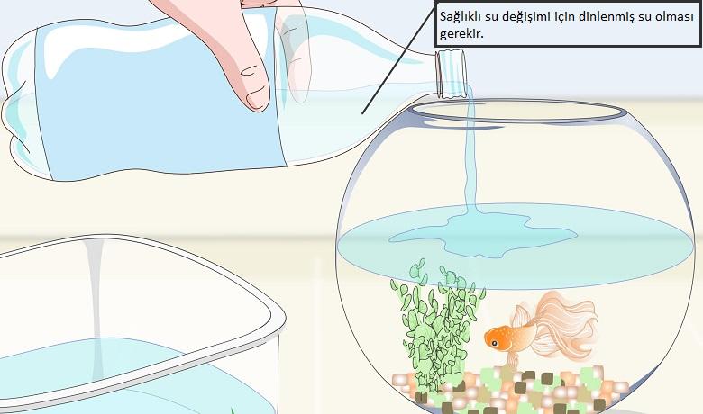 Fanusta japon balıkların suyu kaç günde bir değiştirilir
