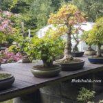 Greenwood Bonsai