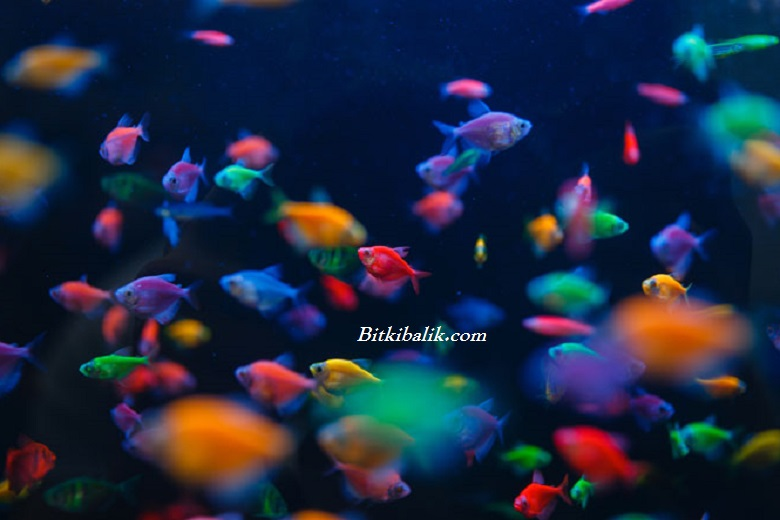 Akvaryum Balık Fiyatları Listesi