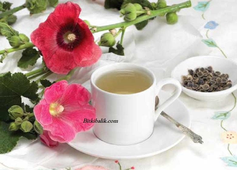 Hatmi Çiçeği Çayı Nasıl Yapılır