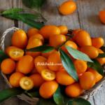 Kumkuat Meyvesi