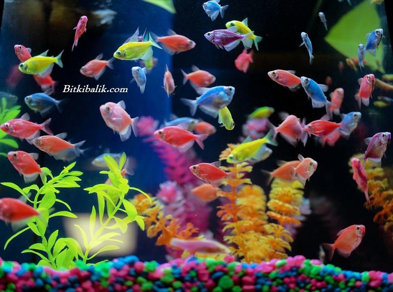 Renkli Balık Akvaryumu