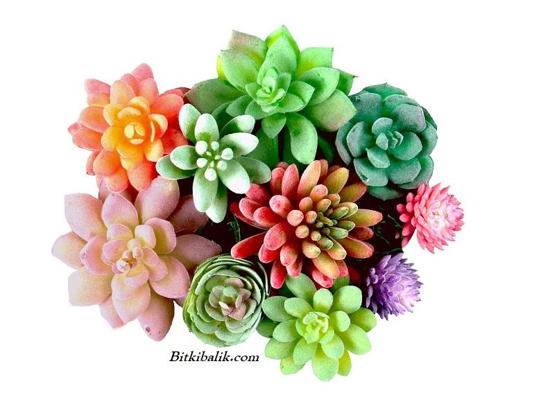 Çiçekli Sukulent Çeşitleri ve İsimleri