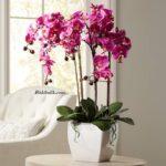 Orkide Bakımı Kaç Günde Sulanır