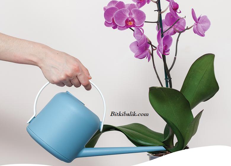 Orkide Çiçeği Kaç Günde Bir Su Verilir