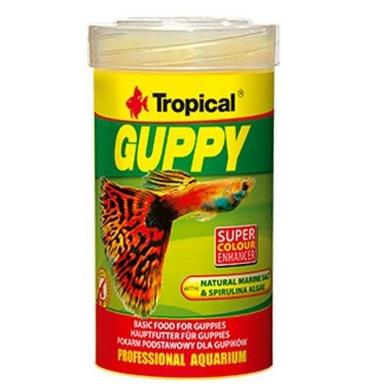 Tropical Guppy Lepistes Yemi